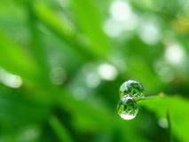 Drop of dew. On grass in fresh moring royalty free stock images