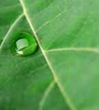 A drop of dew on a leaf Royalty Free Stock Photo