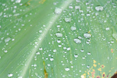 Drop dew Stock Photography