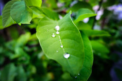 Drop of dew in morning on leaf Stock Images