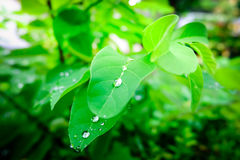 Drop of dew in morning on leaf Stock Photos