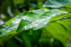 Drop of dew in morning on leaf Royalty Free Stock Photos