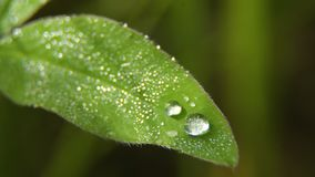 Drop of dew on the grass. Drop of dew in morning on leaf with sun light. Water drops on the green grass. Water drops on fresh green lea close up, macro Stock Images