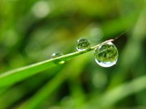 Drop of dew. Drop of water dew on morning stock photography