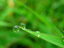 Drop of dew. Drop of water dew on morning stock photo