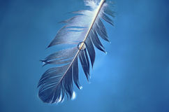 A drop on a feather. Close up a water drop on a feather stock photography