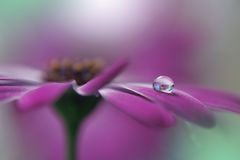 Drop on floral  background closeup.Tranquil abstract closeup art photography.Print for Wallpaper...Floral fantasy design... Royalty Free Stock Photo