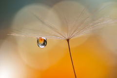 Drop on floral background closeup.Tranquil abstract closeup art photography.Print for Wallpaper...Floral fantasy design... Abstract macro photo with dandelion Royalty Free Stock Image