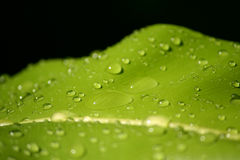 Drop foliage leaf Stock Image