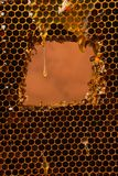 A drop of fresh clear honey flows over the honeycomb. Bee honey in a dark color frame. The concept of natural products. royalty free stock photography