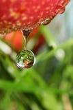 drop fruit Στοκ Εικόνες