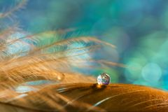 A drop on the golden feather of the bird on an emerald background. Beautiful stylish macro. Stock Photography