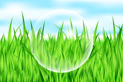 Drop on grass Royalty Free Stock Photo