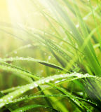 Drop on grass Stock Image