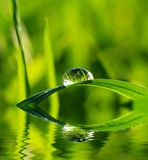 Drop on grass Stock Photography