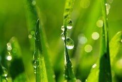 Drop on grass Royalty Free Stock Photos