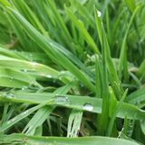 Drop on the grass stock images