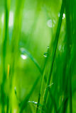 Drop on grass and green background with natural bokeh, soft focu Royalty Free Stock Photos