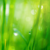 Drop on grass and green background Royalty Free Stock Image