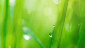 Drop on grass and green background Royalty Free Stock Photography