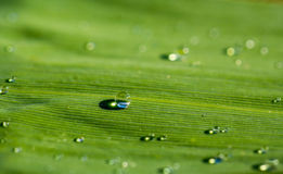 Drop on grass Stock Images