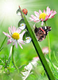 Drop on green grass with butterfly and ladyb Royalty Free Stock Photography