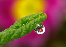 Drop with green grass and flowers Stock Images