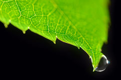 Drop on green leaf Royalty Free Stock Photography