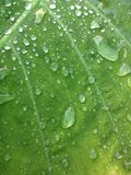 Drop on green leaf Stock Photography