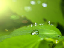 Drop on a green leaf Royalty Free Stock Photo