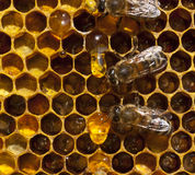 Drop of honey and bees Royalty Free Stock Images