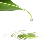 Drop on leaf Stock Image