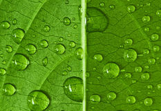 Drop on leaf Royalty Free Stock Images
