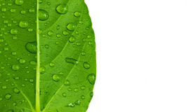 Drop on leaf Royalty Free Stock Photo