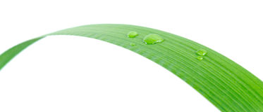 Dropы on a leaf Royalty Free Stock Photography
