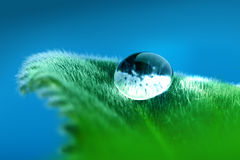 Drop on the leaf. Blue drop on the green leaf Stock Photography