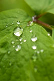 Drop on leaf Royalty Free Stock Photography