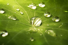 Drop on leaf Stock Photo