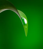 Drop on leaf. Spring is coming Royalty Free Stock Images