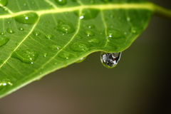 Drop on the leaf Royalty Free Stock Photos