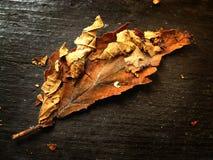 Drop leaf Royalty Free Stock Photo