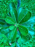 Drop on leaf Stock Images