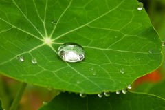 Drop on a leaf (Macro). Big brilliant drop on a leaf with proveins Royalty Free Stock Images