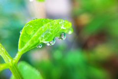 Drop on leaves. In garden Royalty Free Stock Images