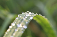 Drop leaves grass Stock Photo
