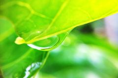 Drop on leaves. In garden Royalty Free Stock Image