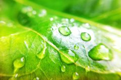Drop on leaves. Drop leaves in garden stock image