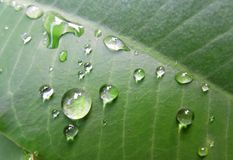Drop on leaves. Drop leaves leaf in garden royalty free stock images