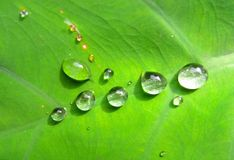 Drop on leaves. Drop leaf leaves stock photo