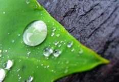Drop on leaves. Drop leaf leaves royalty free stock photos